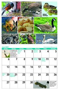 June 21 Calendar